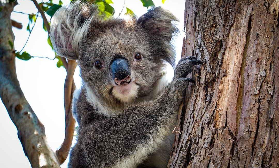 ¡Aprobaron mi visa de estudios para Australia! ¿Y ahora qué?